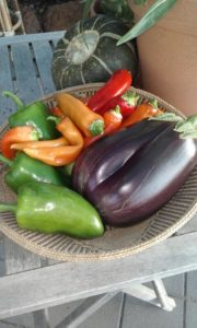 basket full of eggplants, chillis and capsicums