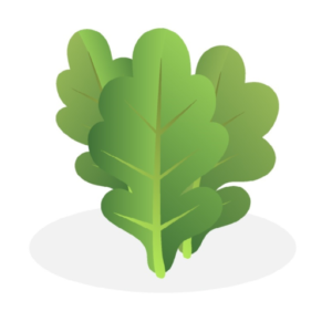 Rare Green Seeds Website Icon